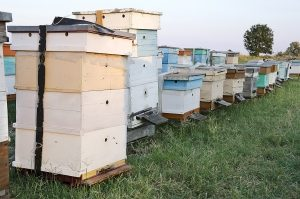 best bee hive stand