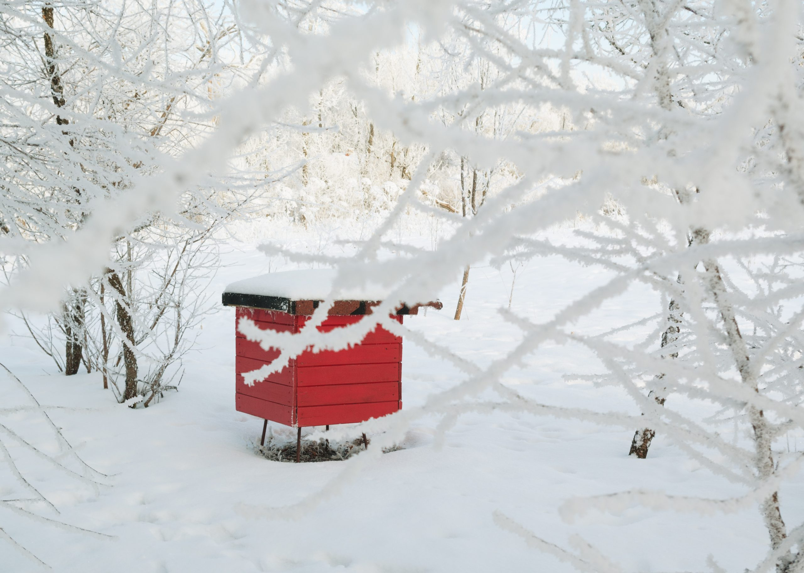 how to winter bees
