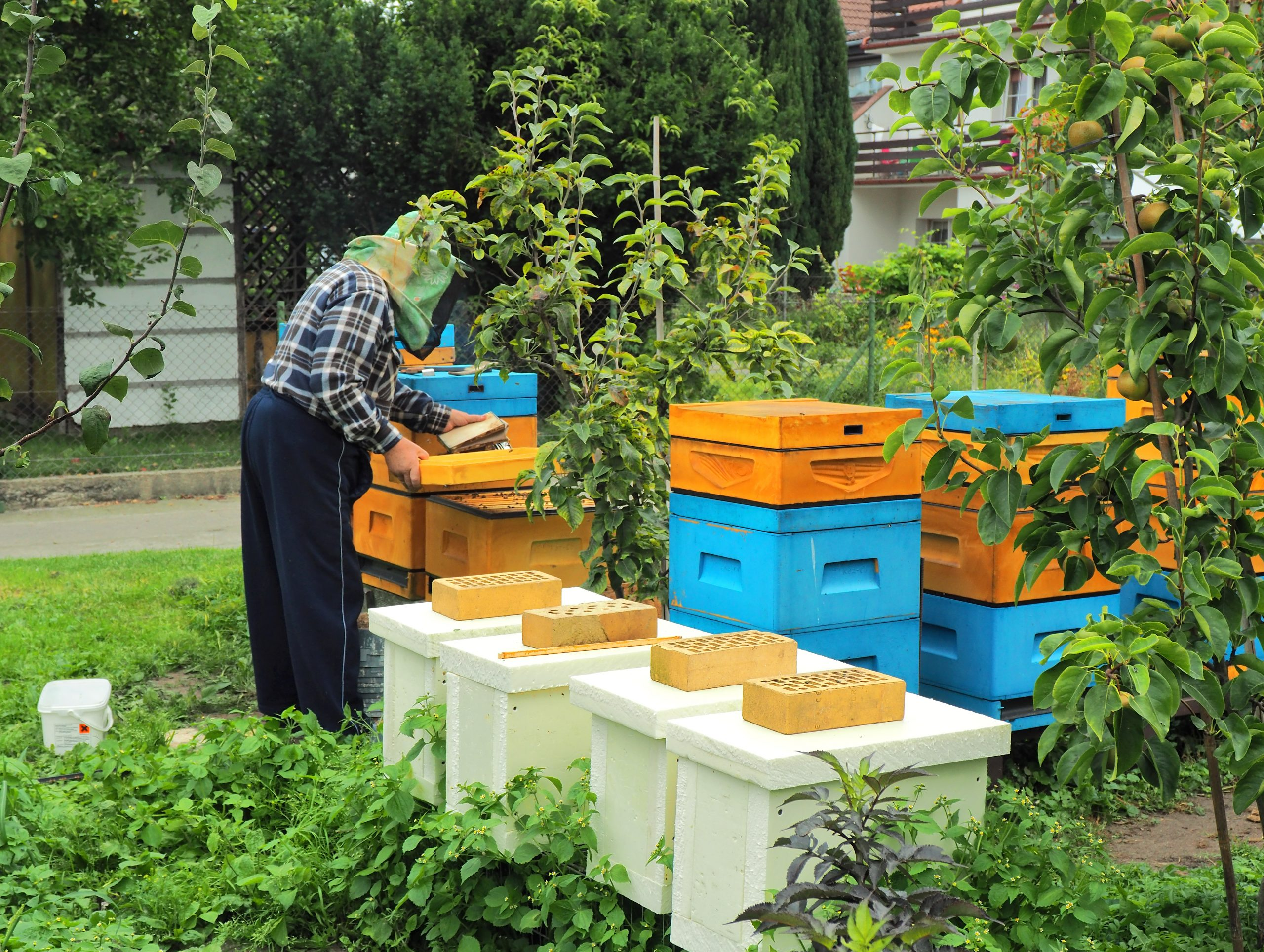 urban beekeeping guide for people just starting out